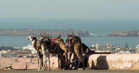 По побережью Магриба на север